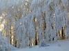 Foreste Casentinesi - Galaverna 2 (Medium)