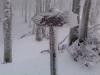 Foreste Casentinesi - Segnaletica invernale (Medium)