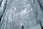 Domenica 22 gennaio 2017 Sciescursionismo nelle Foreste Casentinesi