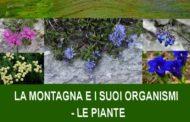 17 gennaio 2017 - La montagna e i suoi organismi